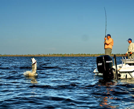 Tarpon Fishing in Charlotte Harbor