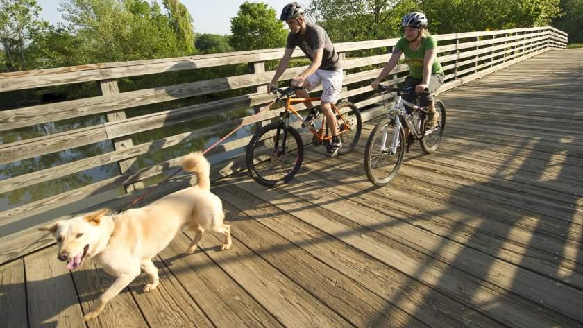 biking with dog on wood bridge