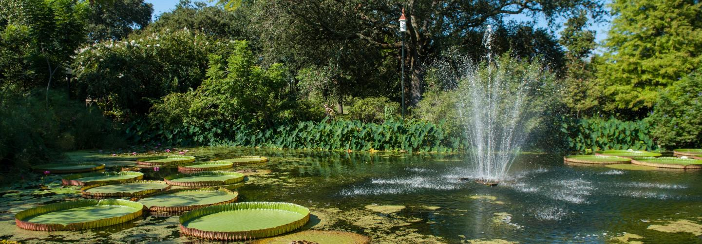 Lily pads and fountain in park pond