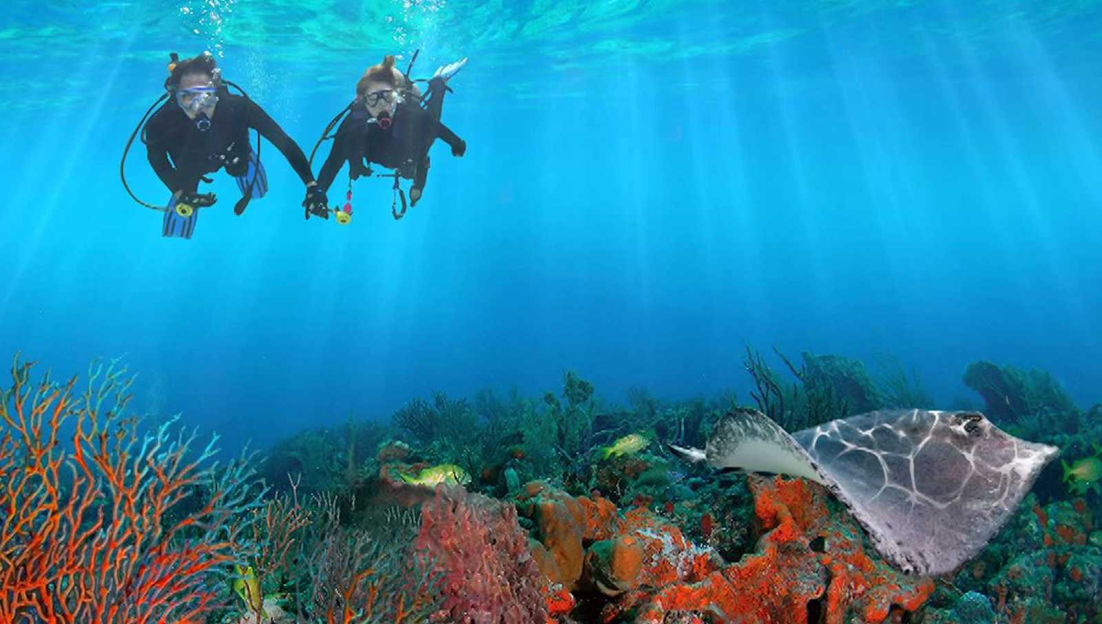 Fort Lauderdale Scuba Diving, Snorkeling & Free Diving