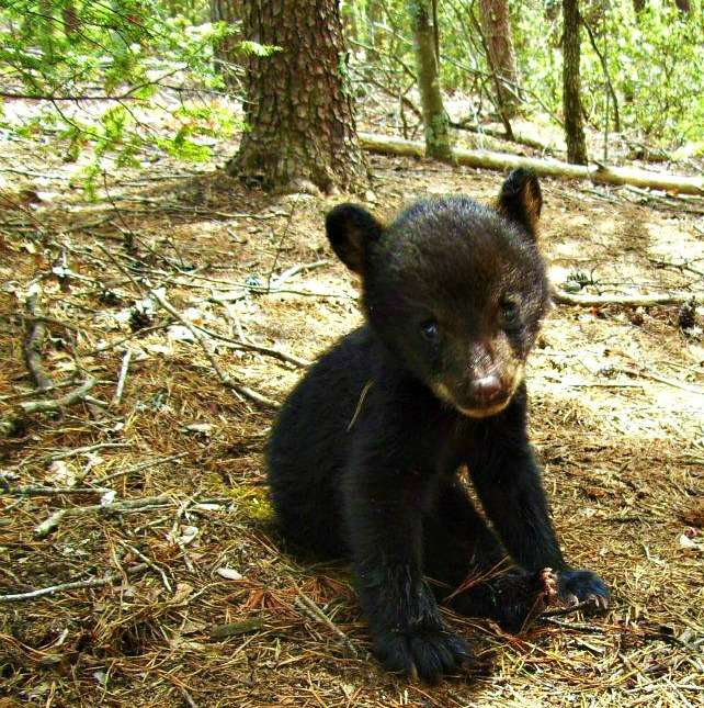 Baby Bear Rescued