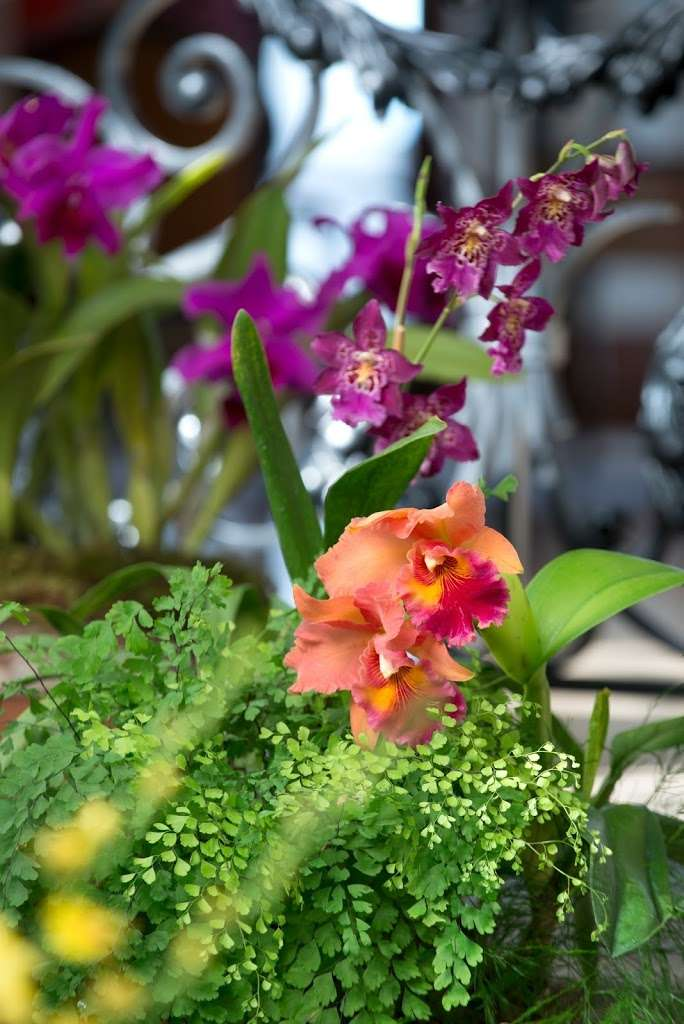Biltmore Reinvents Festival of Flowers Plus Tips on Orchid Care