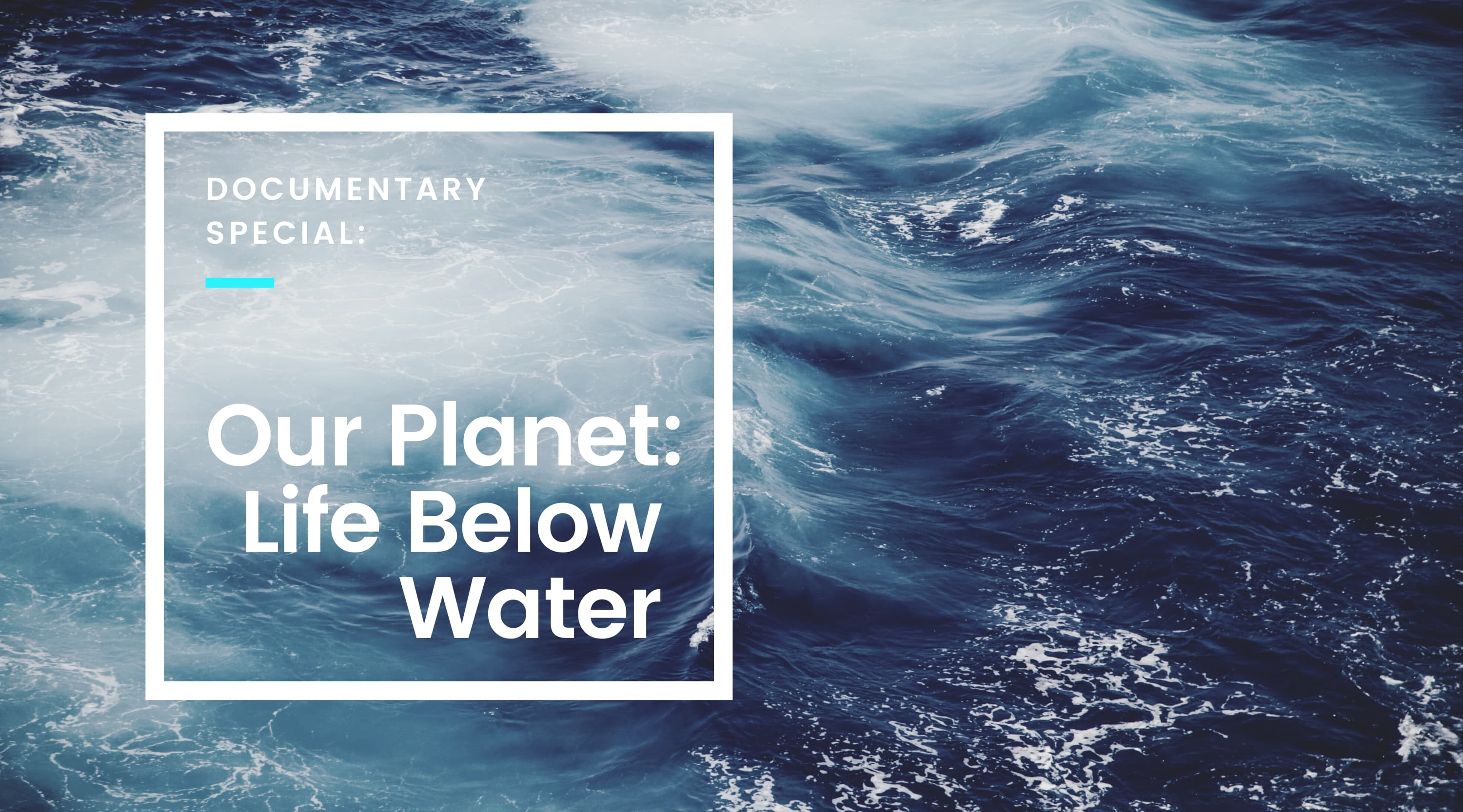 Documentary Special: Our Planet - Life Below Water