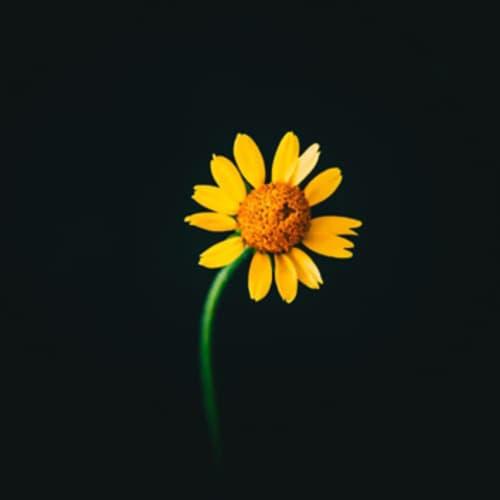 Hope `