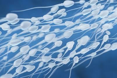 Human sperm flow pxaukuw ingenium 21yyvkm 1024x538
