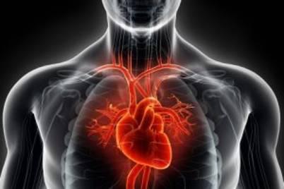 Heart bloodvessels2 300x286