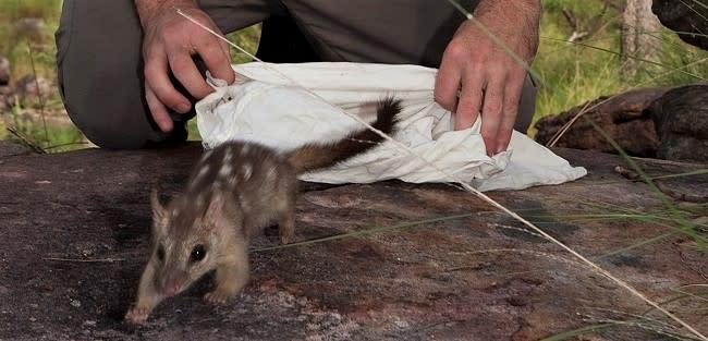 The Long Road to Saving Australia's Native Animals