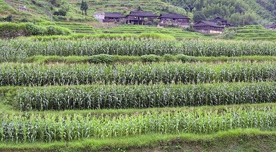 Feeding China: Agricultural Modernisation, Trade and Investment