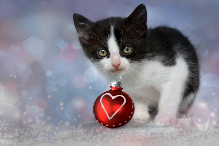 A kitten playing with Christmas baubles may look cute, but it could end up injured. Picture: Pixabay
