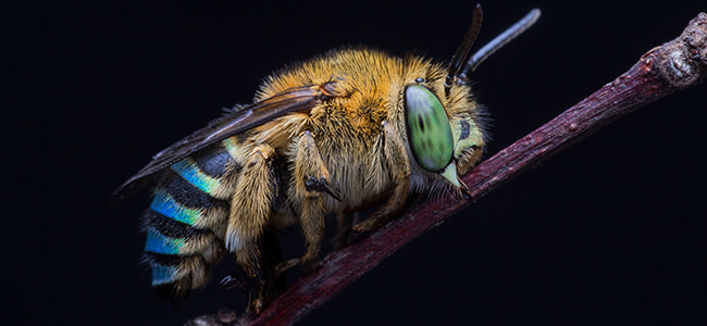 Solutions to Insect Armageddon