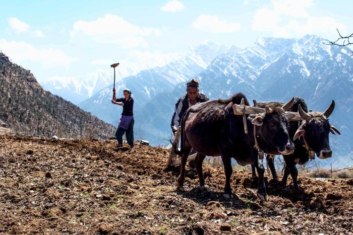 Jane Dyson working the field alongside a villager. Picture: Jane Dyson