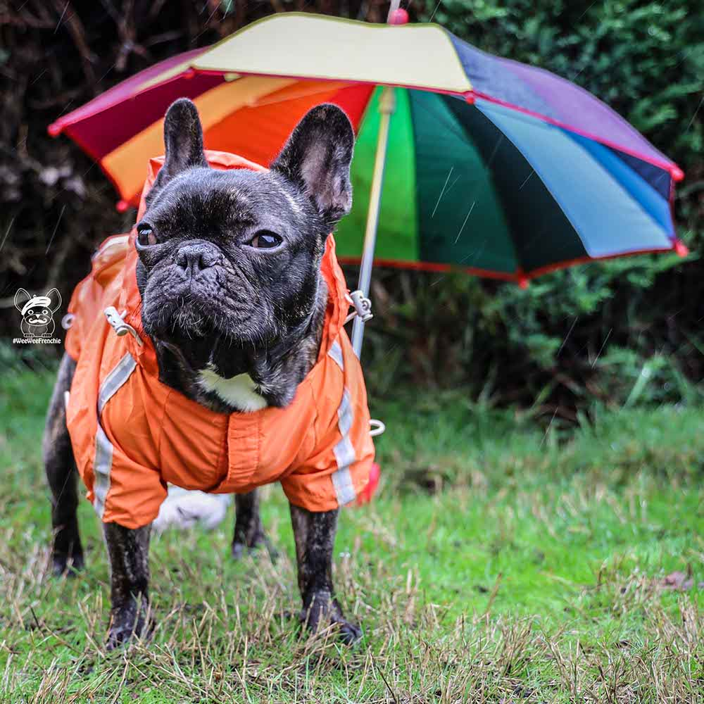 5 Must-have Items for Walking Your Dog in the Rain