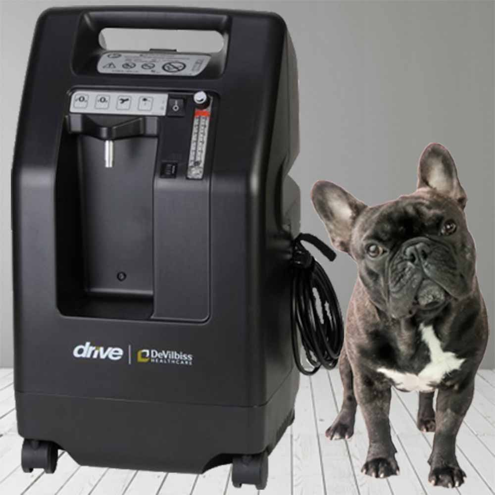 Oxygen Solutions For Your Pet