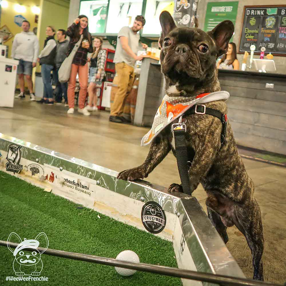Dog-friendly Miniature Golf