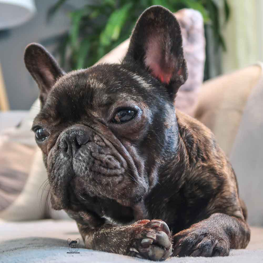 How to Prevent Dry Brittle Nails in Dogs