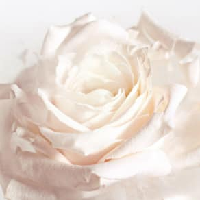 Rose Summer Soiree