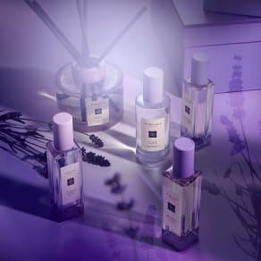 Lavenderland Launch