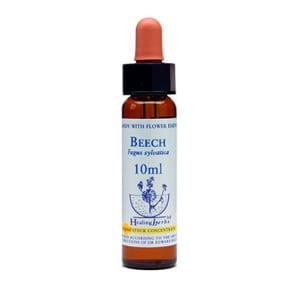 Beech Healing Herb
