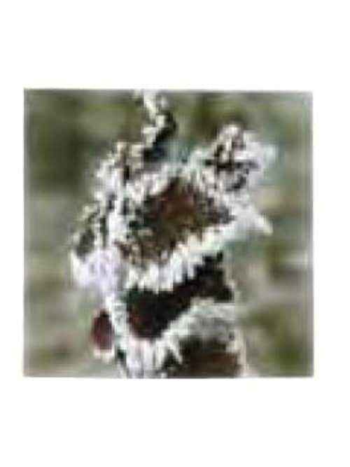 Kj Collection Quadro In Tessuto Con Telaio In Legno 40 X 40 H Cm - Foglia Ghiacciata 1
