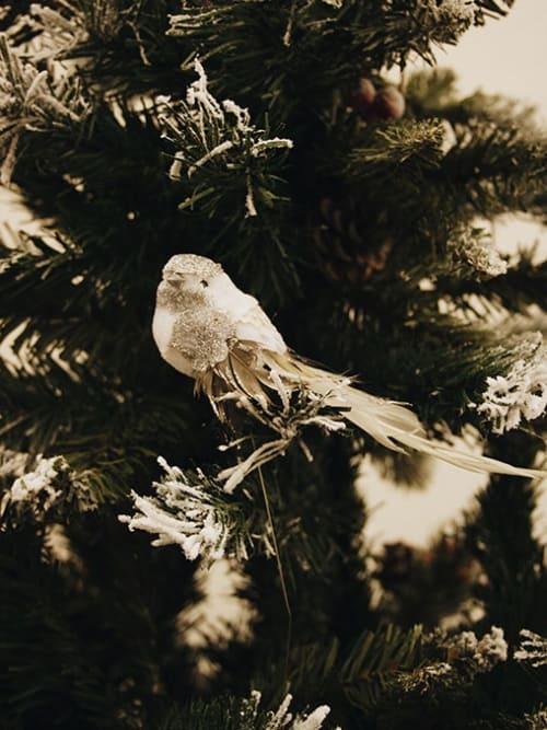 Uccellini in pick per decorarazioni